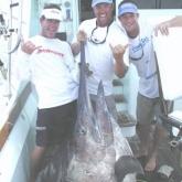 850-black-marlin